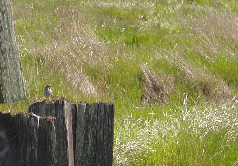 bird sitting on post in grassy field